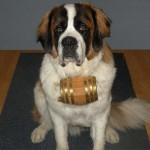 DogBarrel1
